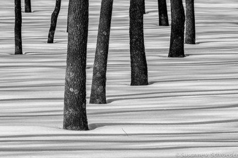 https://www.etsy.com/listing/170023068/black-white-photography-tree-trunks-in?
