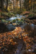 https://www.etsy.com/listing/486311585/autumn-photography-woodland-creek?