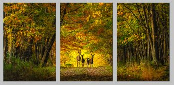 https://www.etsy.com/ca/listing/269073135/large-metal-print-triptych-deer-family?
