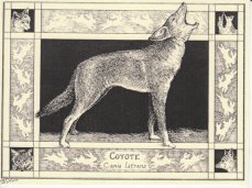 https://www.etsy.com/ca/listing/209609156/coyote-canis-latrans-this-6-pack-of?