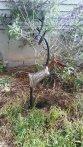 https://www.etsy.com/ca/listing/469380856/vintage-metal-deer-unique-garden-art?