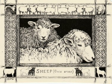 https://www.etsy.com/ca/listing/217596787/sheep-this-6-pack-of-blank-ivory-cards?
