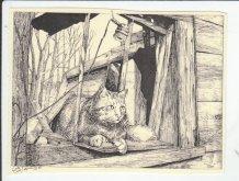 https://www.etsy.com/ca/listing/196852945/cat-framed-this-6-pack-of-blank-ivory?