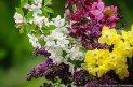 https://www.etsy.com/ca/listing/183381866/flower-photography-spring-flower?
