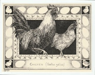 rooster-note-card