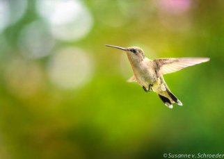 https://www.etsy.com/ca/listing/159052681/hummingbird-photos-bird-photography-kids?