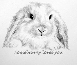 https://www.etsy.com/ca/listing/53148312/bunny-note-card-pencil-drawing-some?