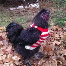 https://www.etsy.com/ca/listing/212335753/chicken-sweaters-chicken-sweater?
