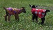 https://www.etsy.com/ca/listing/469069634/handmade-fleece-goat-sheep-lamb-kid?