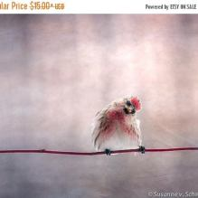 https://www.etsy.com/ca/listing/126947922/on-sale-red-song-bird-kids-wall-art?