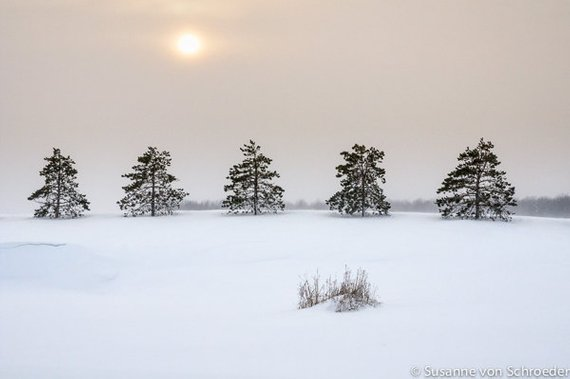 https://www.etsy.com/ca/listing/181205929/winter-photography-trees-in-a-row-sun?